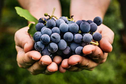 Nation's oldest wine producing region
